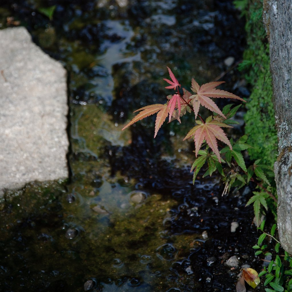 Japan-DSC4411.jpg